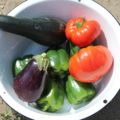 Peppers, Tomatoes, Zucchini, and Eggplant