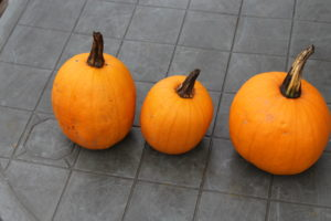 Three Pumpkins Harvested