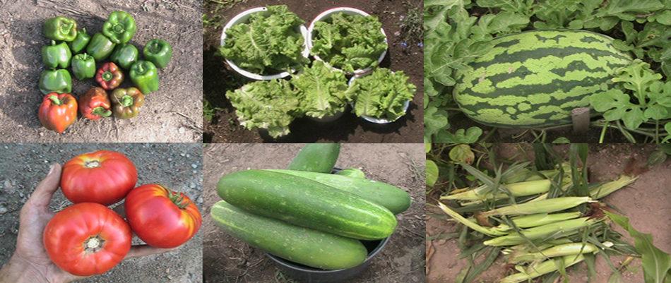 Eric's Organic Garden