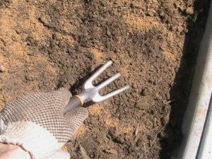 Adding Bone Meal to Soil