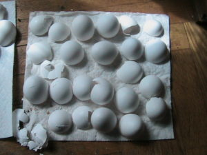 Drying Eggshells
